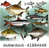 Fish collection, vector illustration - stock vector