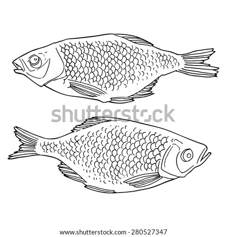 Fish, hand drawn illustration.