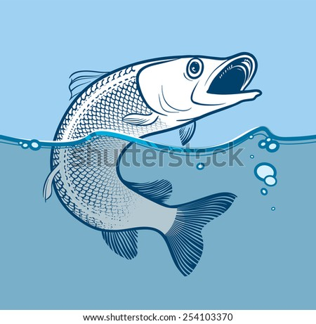 Fish jumping from the water.  Vector Illustration.  eps.8 - stock vector