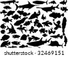 fish silhouettes collection isolated on white background - stock vector
