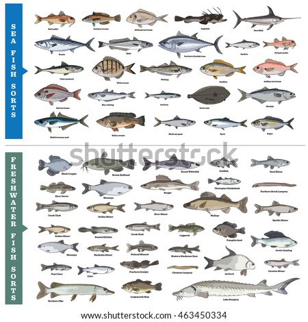 Types of fishes and their names for Types of white fish to eat