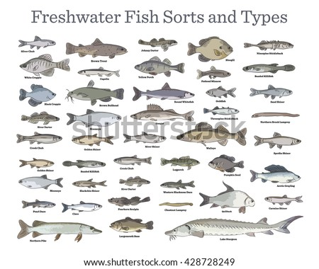 Fish Sorts Types Various Freshwater Fish Stock Vector
