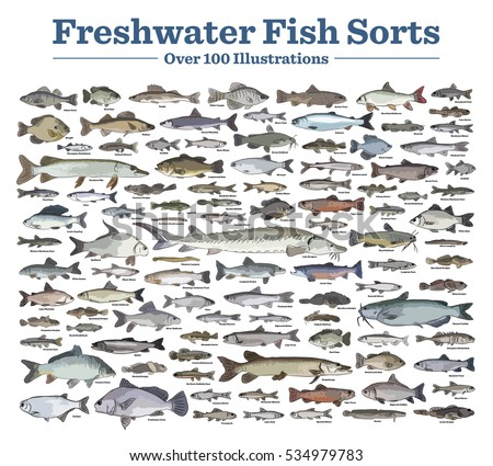 Fish Sorts And Types Various Freshwater Hand Drawn Vector Illustrations Of Different Inland