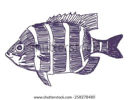 Fish vector drawing - stock vector