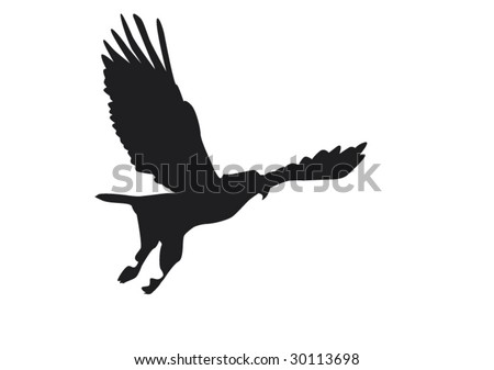 fishing eagle in flight - stock vector