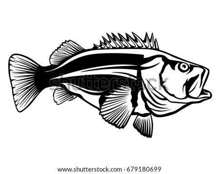 Fishing Logo Rock Bass Fish Vector Illustration Isolated On White
