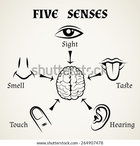 Five senses icons. Human eye, nose and ear, smell and taste and touch. Vector illustration - stock vector
