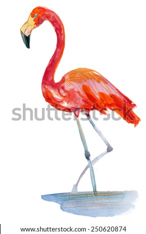 Flamingo in the water. Vector illustration - stock vector