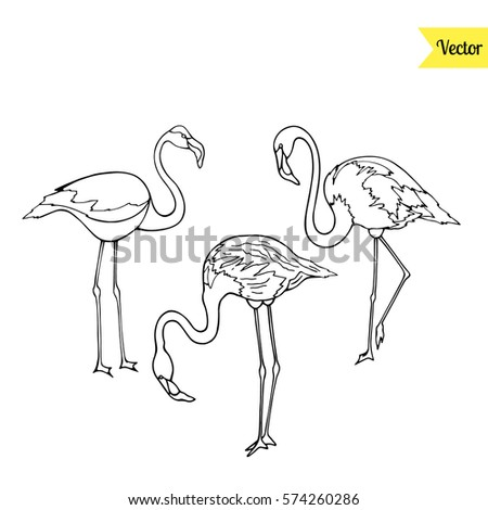 Flamingo Vector Isolated On White Tropical Stock Vector 574260286