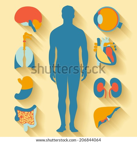 Flat design icons for medical theme. Human anatomy, huge collection of human organs
