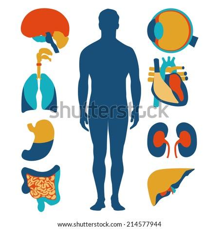 Flat Design Icons Medical Theme Human Stock Vector 206844064 ...