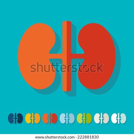 Flat design: kidneys - stock vector