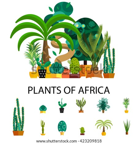 Flat nature of africa vector illustration, outdoor tropical coconut trees for garden isolated set, natural hawaii green plants with leafs, jungle floral summer background, potted exotic palm  - stock vector