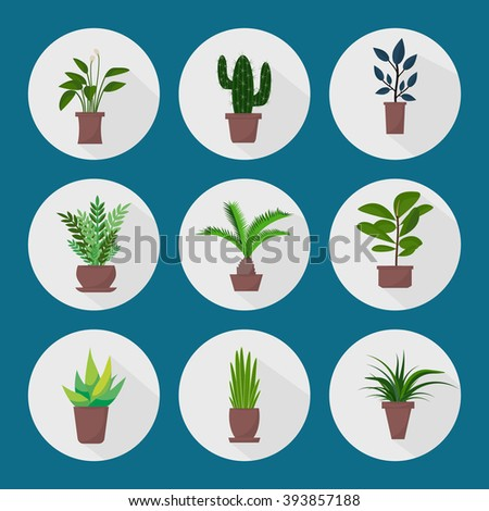 Flat style house plants and flowers in pots vector icons. Set of green indoor vector house plants icons. House plants with shadows on blue background. Cactus, palm, aloe vera, ficus. - stock vector