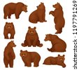 flat vector set of large bear...