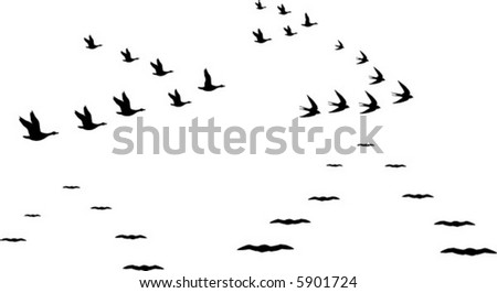 flocks of birds - stock vector