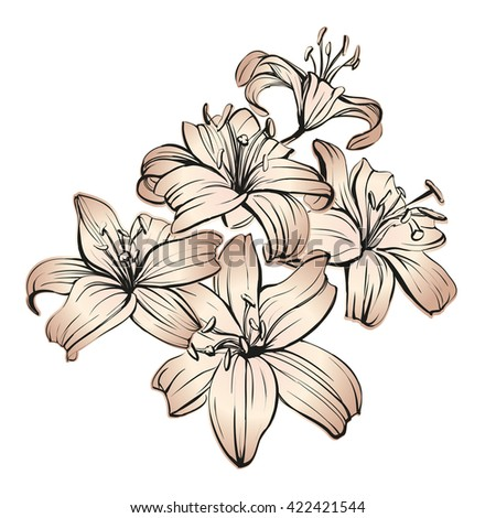 floral blooming lilies hand drawn vector illustration  sketch - stock vector
