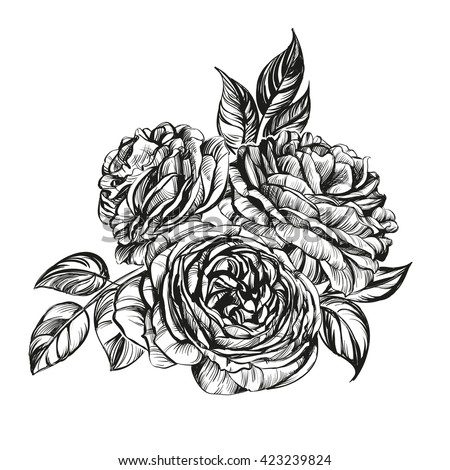 floral blooming rose branch vector illustration  sketch