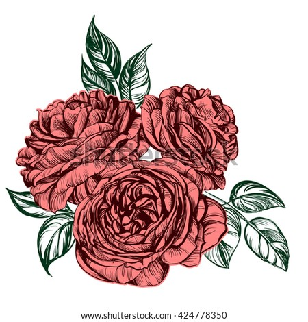 floral blooming rose branch vector illustration  sketch - stock vector