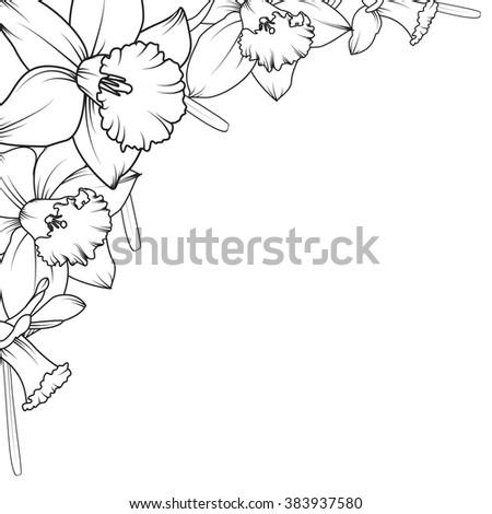 floral corner frame design element narcissus daffodil spring flowers black and white vector illustration