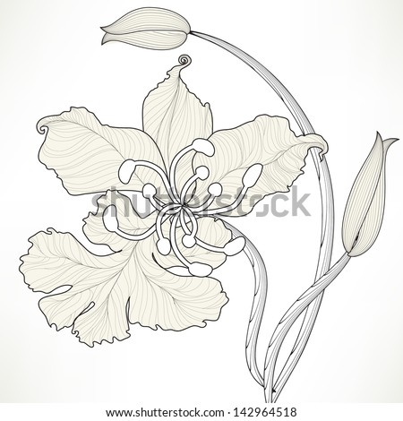 Floral Orchid Elements for design, EPS10 Vector background