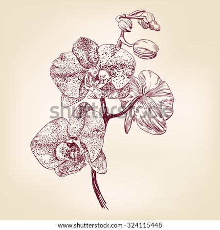 floral orchid hand drawn vector llustration realistic sketch - stock vector