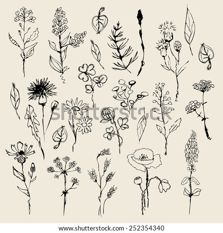 Floral set  hand drawn. vector - stock vector