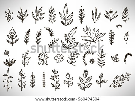 Floral Set of black hand drawn grunge floral elements, tree branch, bush, plant, leaves, flowers, branches petals isolated on white. Collection of flourish elements for design. Vector illustration.
