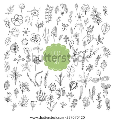 Floral set, plants and herbs  - stock vector