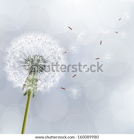 Floral trendy background with dandelion. Beautiful nature wallpaper. Stylish gray vector background. Vector illustration - stock vector