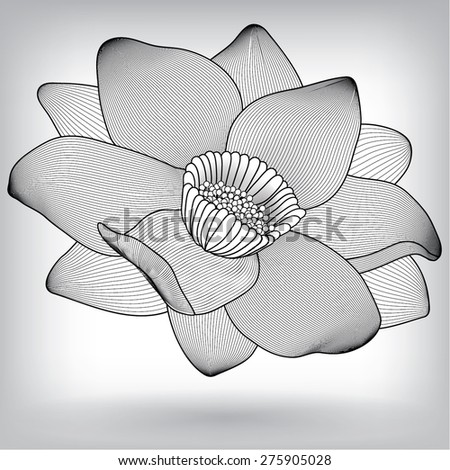 Floral Water Lily Lotus Elements for design, EPS10 Vector backgroun - stock vector