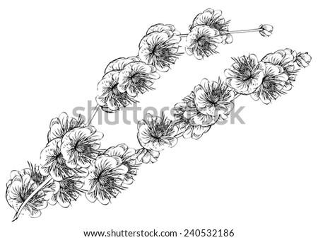 Line Art Flower Design : Flower black white line drawingsrealistic sakura stock vector