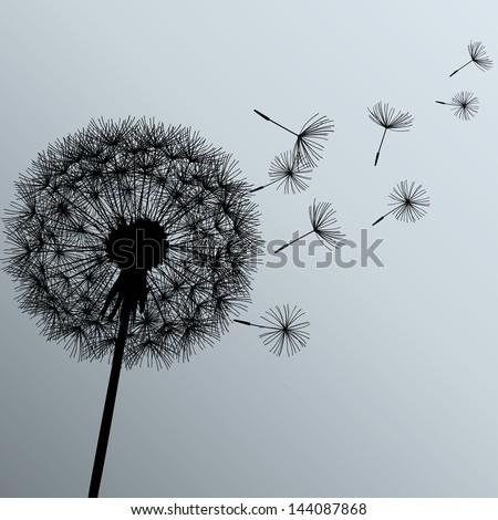 Flower dandelion black on gray background. Vector illustration - stock vector