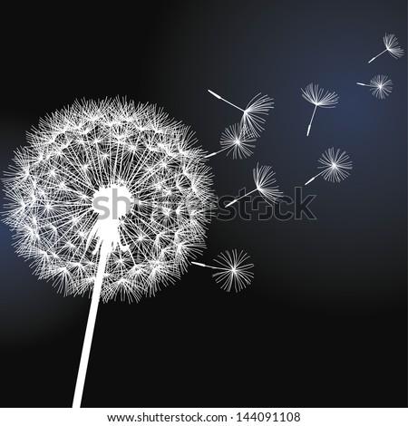 Flower dandelion white on black background. Vector illustration - stock vector