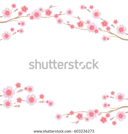 Flower design. Flower background. Branches of Sakura isolated on white background. Apple-tree flowers. Cherry blossom. Vector EPS 10 cmyk
