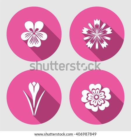 primula viola blue poppy crocus saffron spring