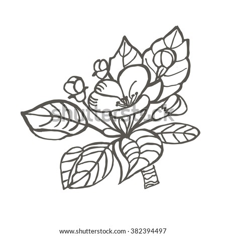 Flower of Apple. Drawing, engraving. Freehand drawing. Beautiful vintage background with blooming flower.  Flora. Vector Illustration.