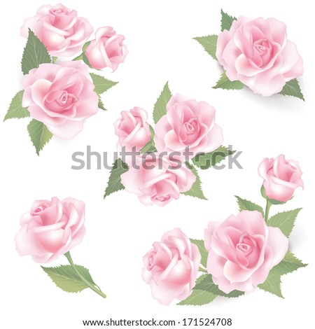 Flower rose set. Vector spring flourish image collection isolated on white background. - stock vector
