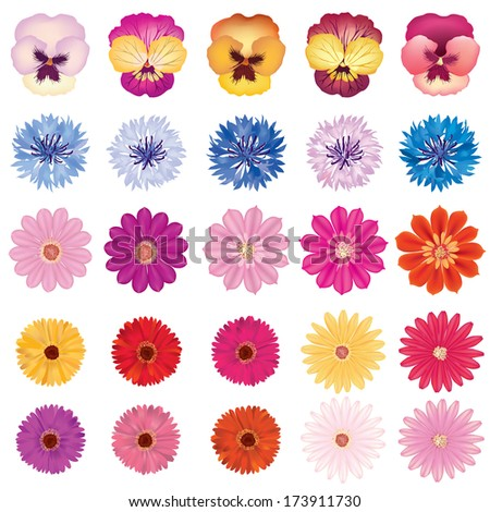 Flower set. Bloom Isolated on white background. - stock vector