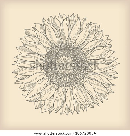 flower vintage retro background - sunflower flower drawn - vector - stock vector