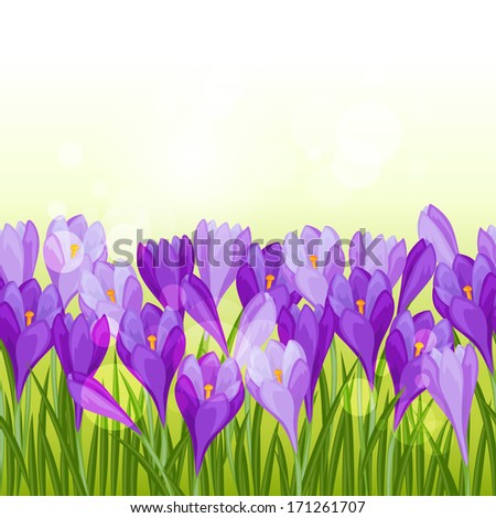 Flowers background with purple crocuses.