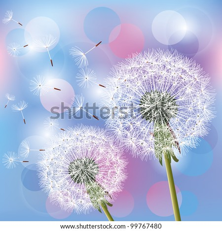 Flowers dandelions on light blue - pink background, vector illustration. Place for text