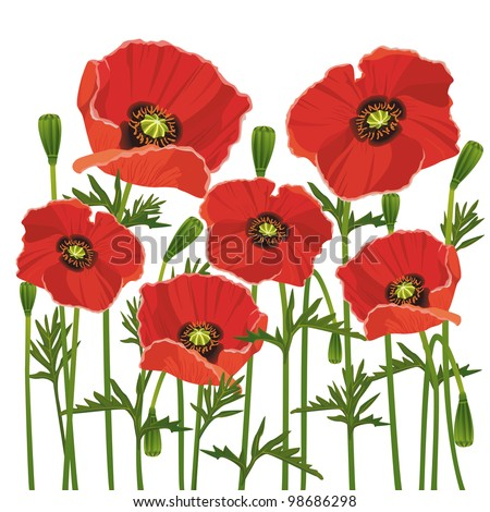 Stock vector flowers red poppies isolated on white background vector