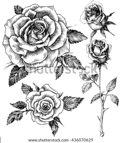 Flowers Set Hand Drawn Rose Vector Stock Vector 2018 436070629