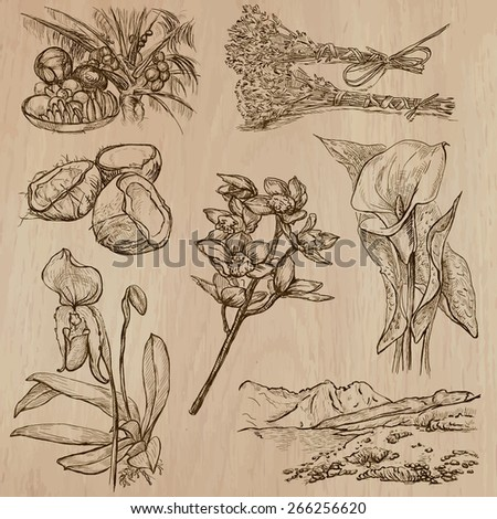 Flowers, Trees, Plants. Collection of an hand drawn vector illustrations  - stock vector