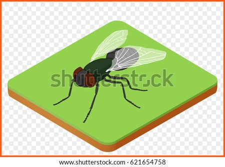 excellent fly insect isometric isolated vector eps housefly d with fly cuisine 3d. Black Bedroom Furniture Sets. Home Design Ideas