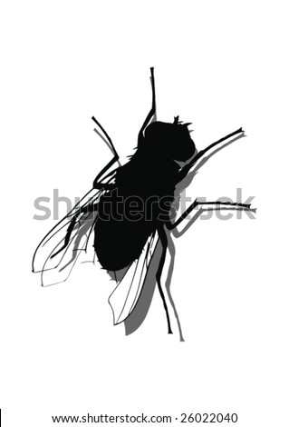 Fly On The Wall -Vector Art- - stock vector
