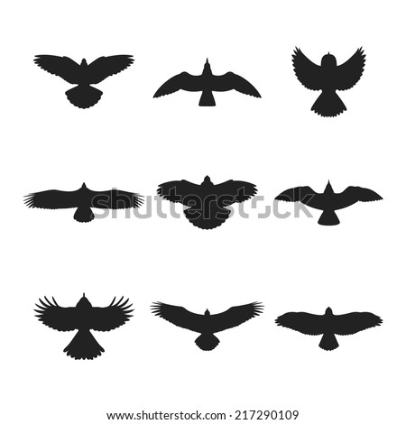 Aninimal Book: Flying Bird Like Eagle Sparrow Dove Stock Vector 217290109 ...