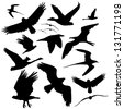 Flying Bird Silhouette Collection. EPS 8 vector, grouped for easy editing. No open shapes or paths. - stock vector