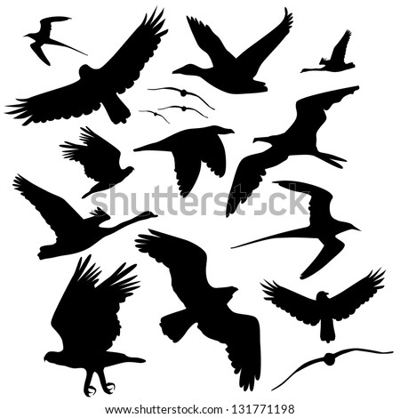 Birds Flying Silhouette Stock Images, Royalty-Free Images ...